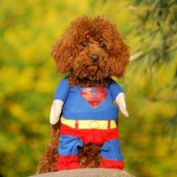 ★スーパーマンに変身★ 面白 ドッグウェア S 他サイズ有