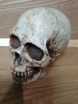 中古 ドクロ 骸骨 スカル 貯金箱 陶器製