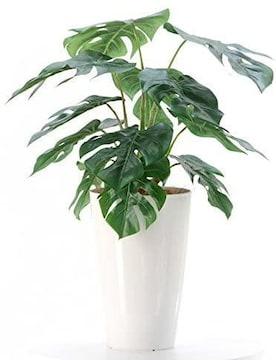 【銀と光触媒で空気を洗浄】人工観葉植物 モンステラ