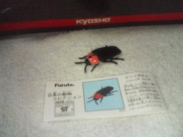 フルタ   日本の動物2  ゲンジボタル