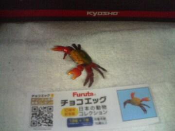 フルタ  10周年  日本の動物                アカテガニ