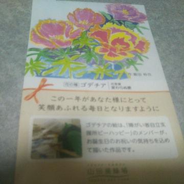 お花の種!   ゴデチア
