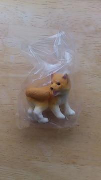 〓エポック社〓柴犬〜特選〜〓�Dゴマ柴(しっぽまて)〓