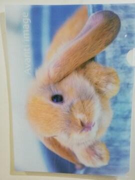 未使用 クリアファイル うさぎ/ウサギ/兎/ロップイヤー ¥105
