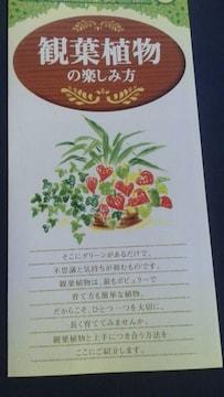 ガーデニング、観葉植物の楽しみ方冊子