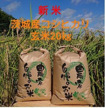 茨城令和3年産新米コシヒカリ玄米20�s