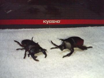 フルタ  日本の動物1  コレクション  オオクワガタ      カブトムシ