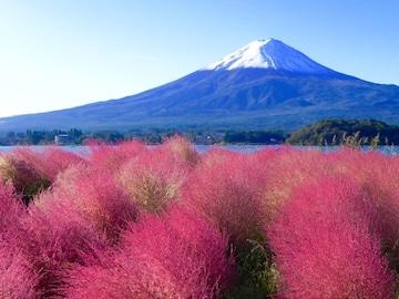 世界遺産 富士山とコキア3 写真 A4又は2L版 額付き