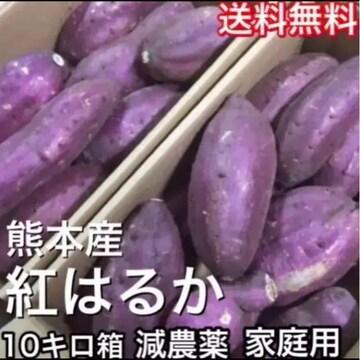 熊本県産紅はるか大きめ約10キロ