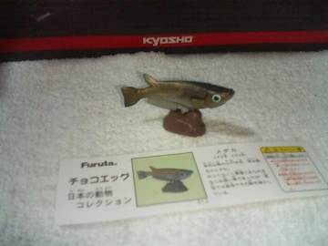 フルタ  日本の動物1  メダカ