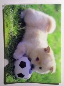 未使用 クリアファイル わんこ/仔犬  やんちゃな仔犬 ¥100