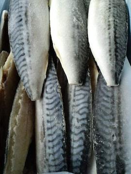 ☆大人気** ノルウェー産 塩サバフィーレ 10枚  冷凍