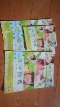 岩田剛典植物図鑑チラシ試し読み本