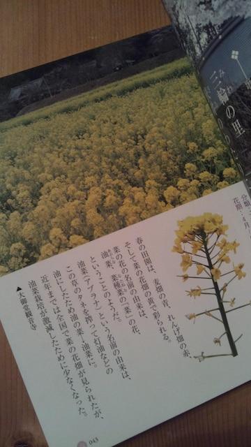 *美智子さまのお好きな花の図鑑・used*