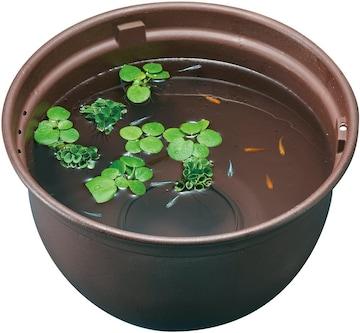 メダカ元気 メダカのための飼育鉢 茶370