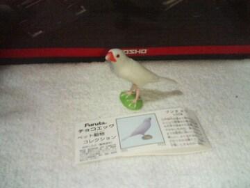 フルタ  ペット動物1   ブンチョウ          白文鳥