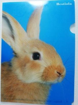 未使用 クリアファイル どアップ! うさぎ/ウサギ/兎 ¥120
