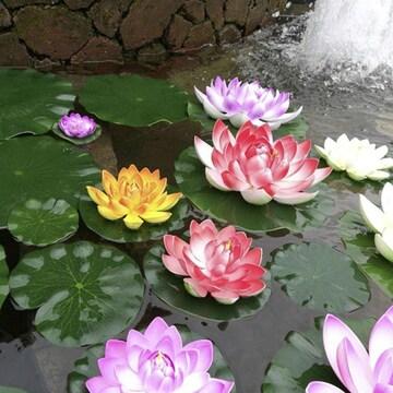 蓮の花 5個セット