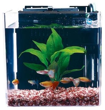 Tetra スマート熱帯魚飼育セットSP-17TF