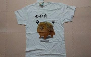 新品 Pomeranian ポメラニアン