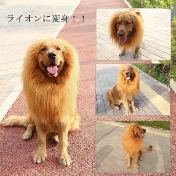 ライオン たてがみ 犬用コスチューム