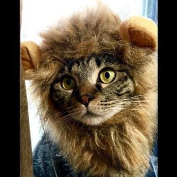 ★犬猫用ウィッグ★ タテガミ 面白 ライオン コスプレ