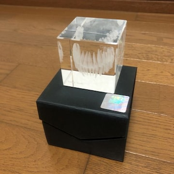 3D Crystal Gebiss Set of Teeth 歯医者 クリスタル