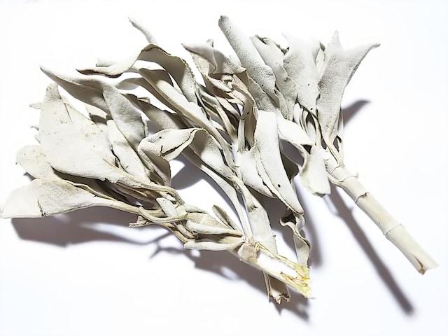 cocco★ホワイトセージ(カリフォルニア産)