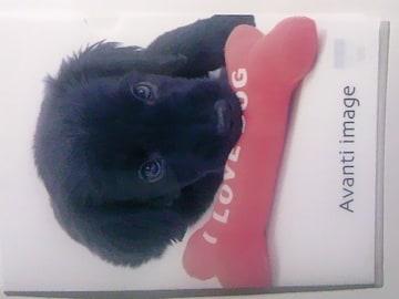 未使用 クリアファイル わんこ 仔犬/珍しいフラットコーテッドレトリバー ¥103