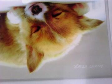 未使用 クリアファイル わんこ 仔犬/ウェルシュコーギー コギ ¥115