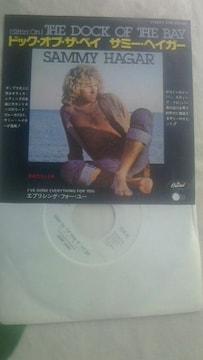 サミーヘイガー ドッグ・オブ・ザ・ベイ オーティス・レディングの名曲カバー ヴァンヘイレン