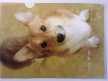 未使用 クリアファイル わんこ 成犬/ウェルシュコーギー コギ ¥115