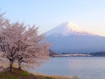 世界遺産 富士山 写真 さくらと富士山 A4又は2L版 額付き